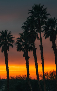 Palm Trees at Sunset in Palm Springs
